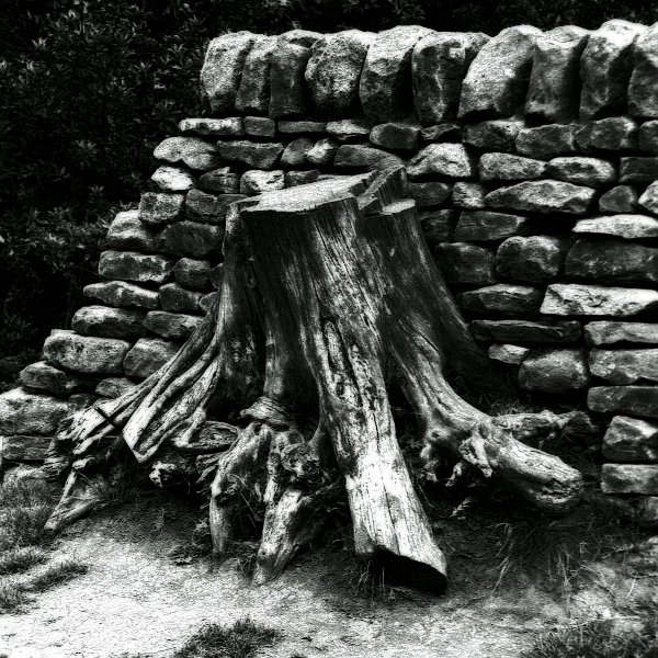 Tree stump in wall