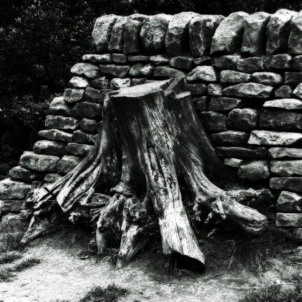 Tree stump in wall