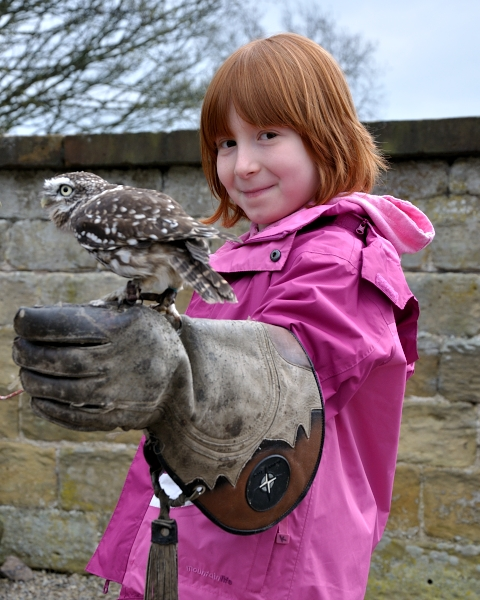 Holding a Little Owl