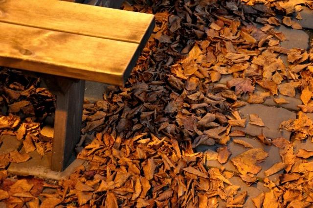 leaves under streetlight