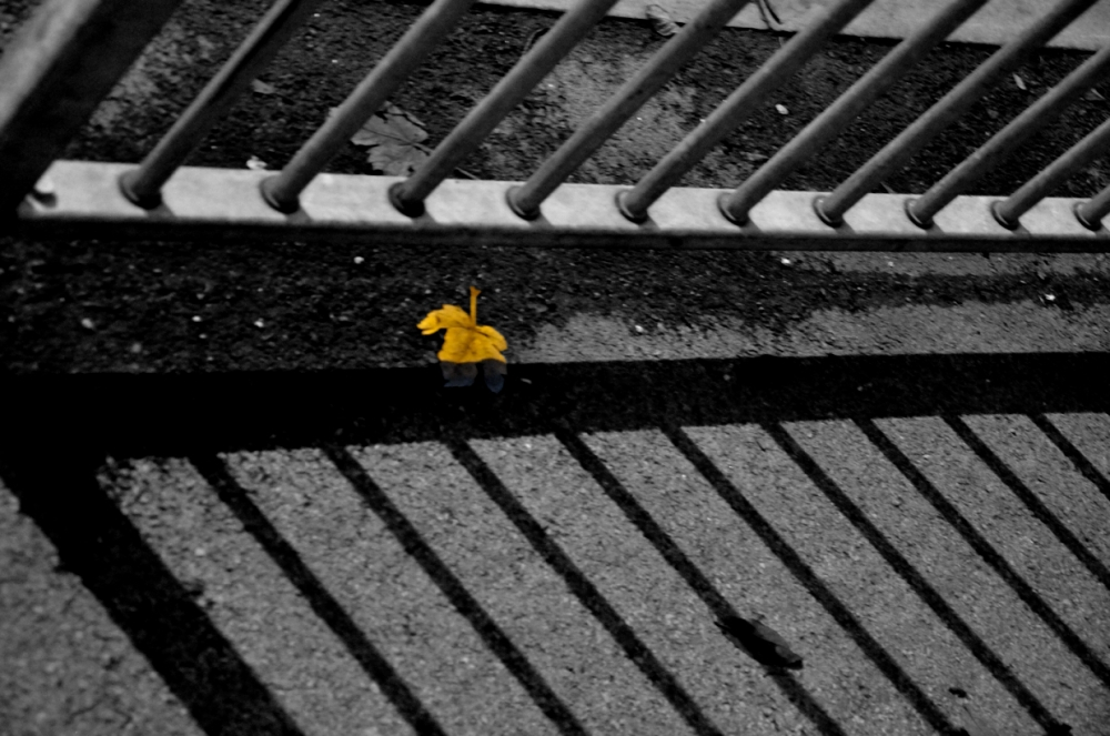 leaf on the ground. monochrome conversion