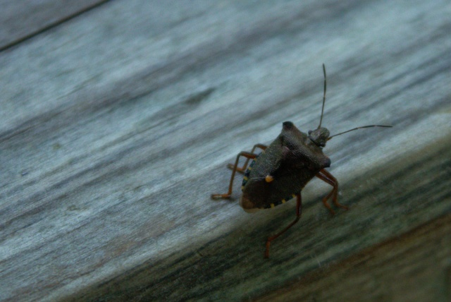 bug on picnic table