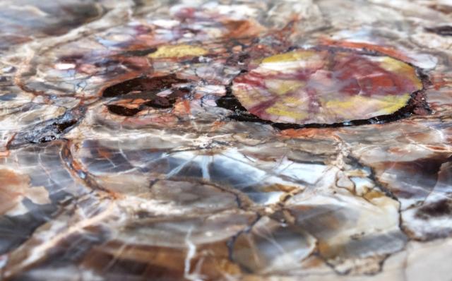 Petrified Tree Stump