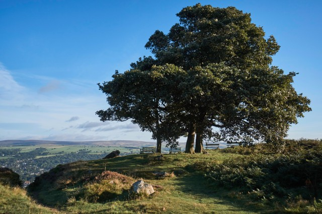 Tree and benches overlooking Ilkley
